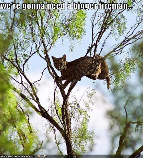 climbing fireman lollynxes tree - 2797588992