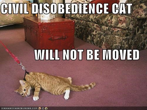 CIVIL DISOBEDIENCE CAT WILL NOT BE MOVED