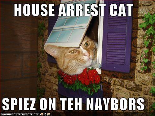 [Image: house-arrest-cat-spiez-on-teh-naybors]