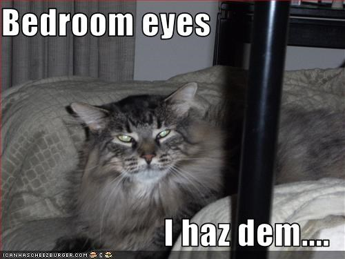 Bedroom Eyes I Haz Dem Cheezburger Funny Memes Funny Pictures