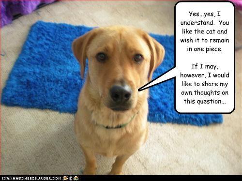 labrador lolcats mixed breed reason talking understand - 2802674688