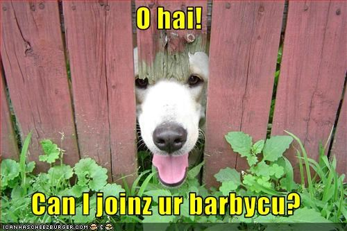 barbeque eat fence food hole labrador - 2805093888