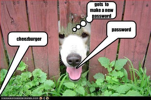 password cheezburger gots to make a new password