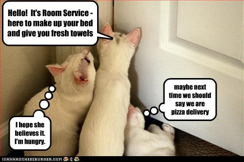 Hello! It's Room Service - here to make up your bed and give you fresh towels I hope she believes it. I'm hungry. maybe next time we should say we are pizza delivery