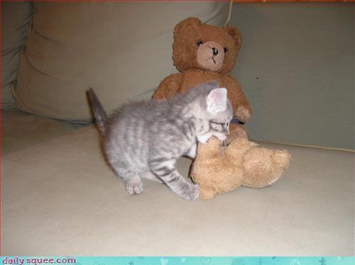 kitten,naps,toys