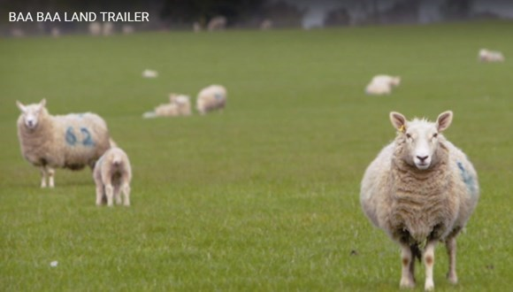 the most boring movie featuring 8 hours of sheep only