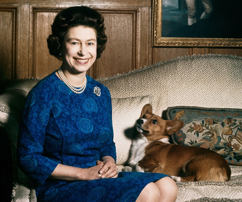 the queen and her newest adopted corgi