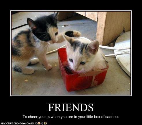 box cute friend kitten Sad - 2808347648