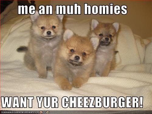 Cheezburger Image 2809730816