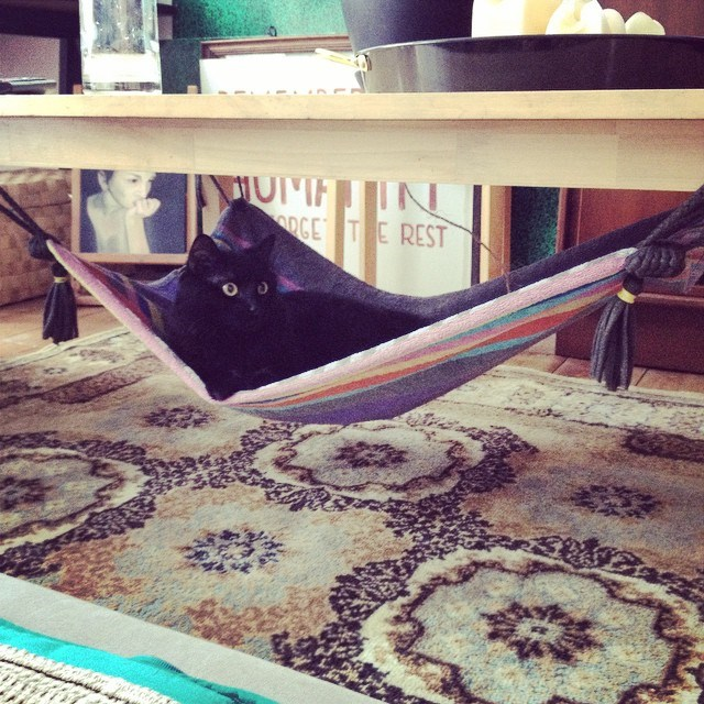 DIY - make your cat a beautiful hammock