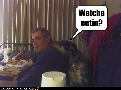 annoying eating human whatbreed - 2811223552