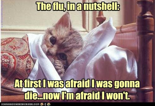 The Flu In A Nutshell Cheezburger Funny Memes Funny Pictures