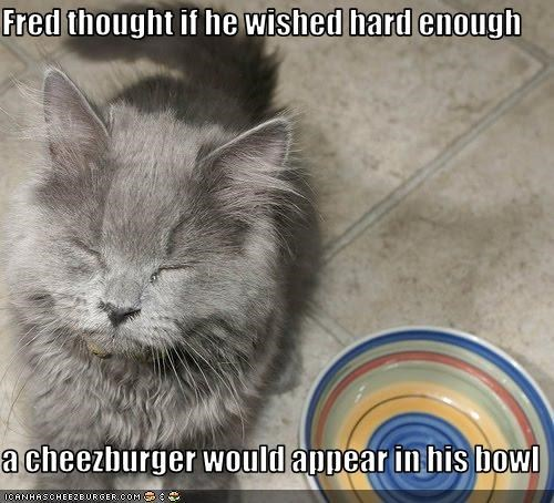 Fred thought if he wished hard enough  a cheezburger would appear in his bowl