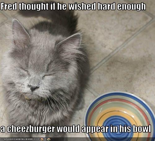 cheezburger nom nom nom want - 2813205760