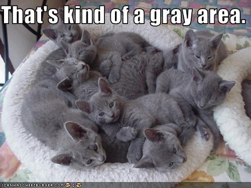 cute gray kitten - 2815561728