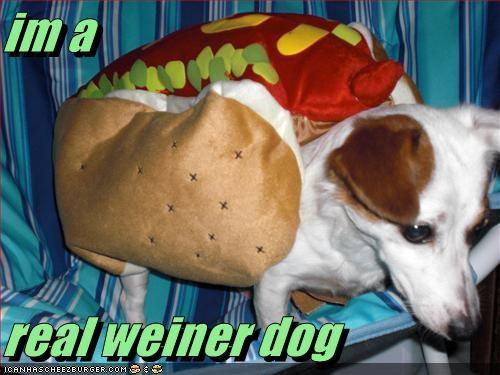 Cheezburger Image 2815922432