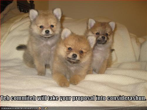 consideration itteh bitteh committeh itty bitty puppies whatbreed - 2816469248