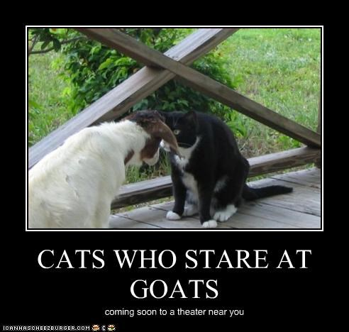 lolgoats,Staring