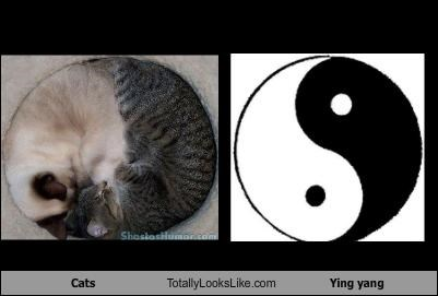 Cats,sleeping,yin yang symbol