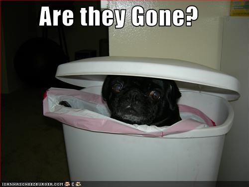 can,garbage,hiding,pug