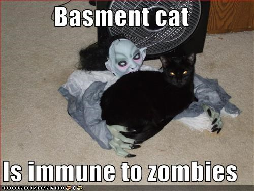 Funny Zombie Memes : Basment cat is immune to zombies cheezburger funny memes funny