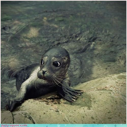 aloof cute seal - 2821823744