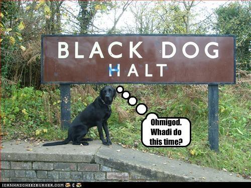 black guilty halt labrador stop trouble