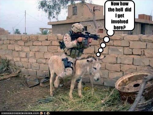 donkey,gun,soldier