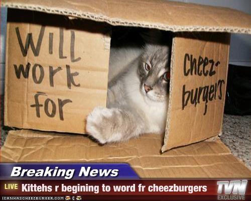 Cheezburger Image 2822187520