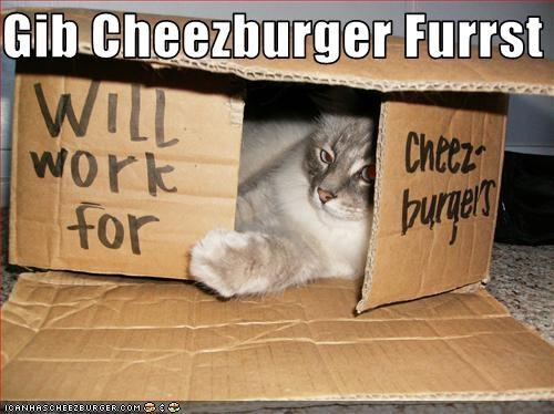 Cheezburger Image 2822411776