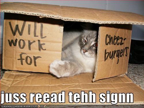 Cheezburger Image 2823795200