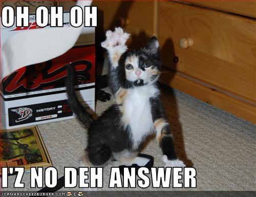 answer cute kitten smart - 2825692928