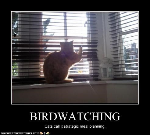 birdwatching hunting nom nom nom - 2826040064