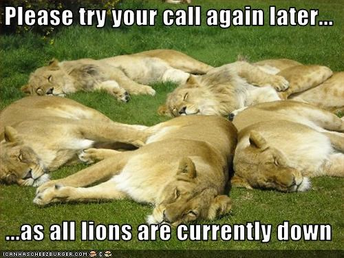 lollions,nap,sleeping