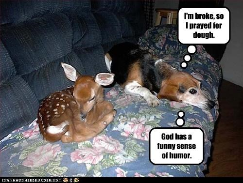 beagle,couch,deer,god,prayer