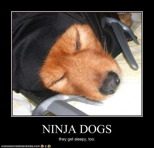 NINJA DOGS they get sleepy, too.