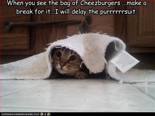 Cheezburger Image 2830092544
