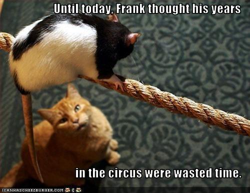 circus lolrats - 2830335744
