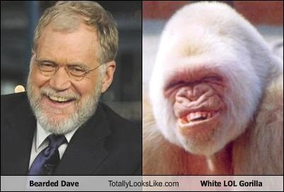 albino gorilla,beards,David Letterman,TV