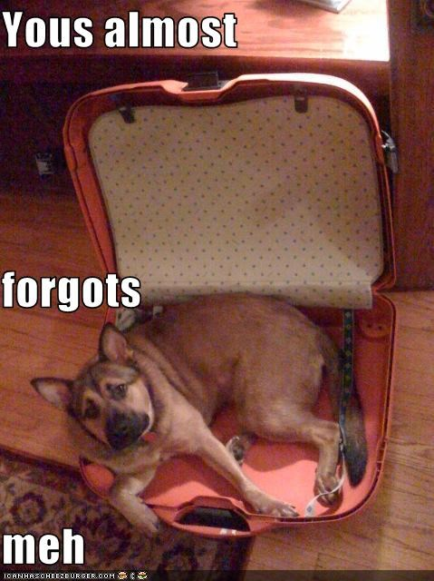 forgot,german shepherd,luggage,packing