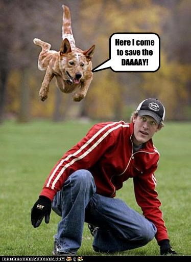 australian cattle dog blue heeler hero jump save superdog - 2832623360