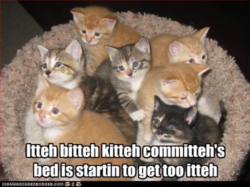 bed cute ibkc kitten