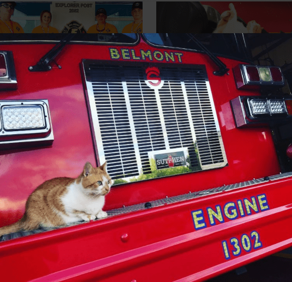 a stray cat who became a star at the local fire department