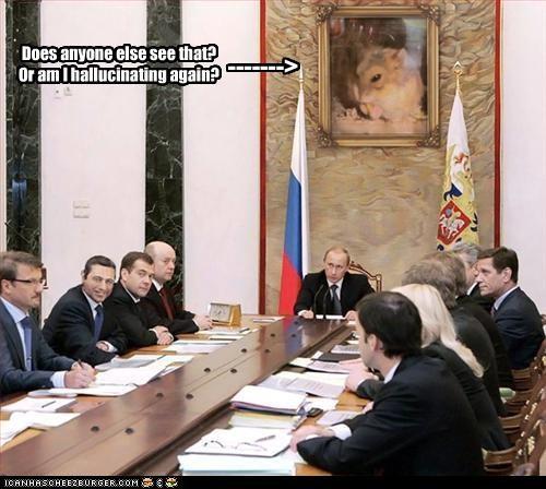 Dmitry Medvedev hamster president prime minister russia Vladimir Putin vladurday wtf - 2835377920