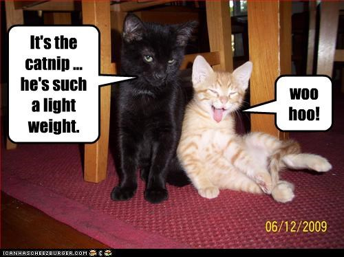 It's the catnip ... he's such a light weight. woo hoo!