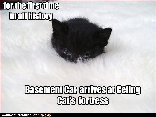 for the first time in all history Basement Cat arrives at Celing Cat's fortress