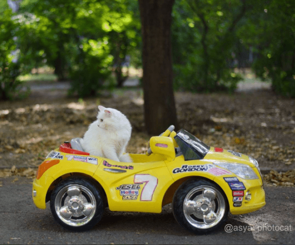 cool cat from Ukraine that is having more fun than you thought was possible