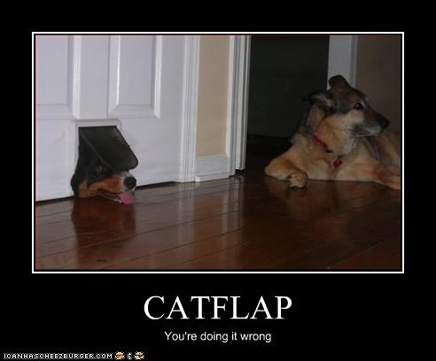 CATFLAP You're doing it wrong