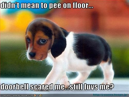 beagle,doorbell,floor,love,pee,puppy,scared