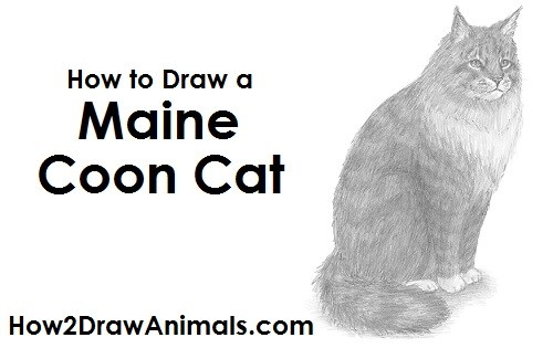 tutorial for drawing a maine coon cat